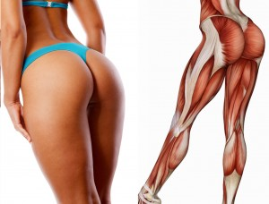 Female Lower Body Muscles